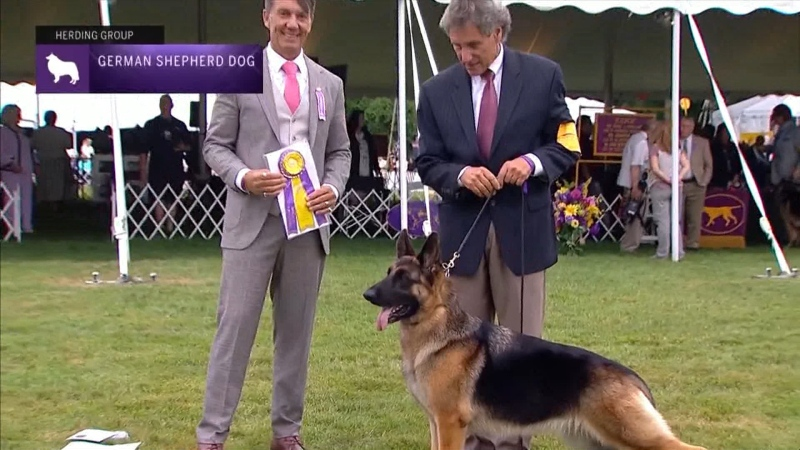 A B.C. breeder came away with a prize at the Westminster dog show.