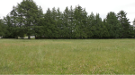 The green space that Saanich hopes to turn into a park called Kings Park is shown: June 14, 2021 (CTV News)