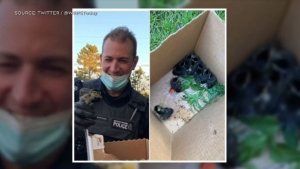 Some Waterloo regional police officers are being praised for rescuing a group of ducklings. (Source: @WRPSToday).