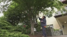 Sawatsky Sign-Off- Toy Tree