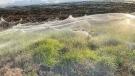 A still image from a video shows spiders' gossamer near wetlands in Gippsland on June 14. (Carolyn Crossley via Reuters/CNN)