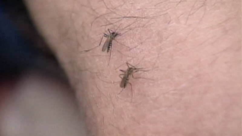 As climate change impacts temperatures across the globe, a new study suggests it may bring on longer mosquito seasons.