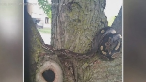 Missing snake on the loose in Kitchener