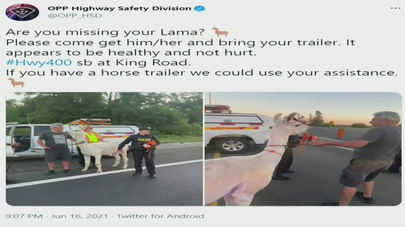 Llama removed from Highway 400