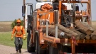 SaskPower crews repair fallen poles near Zealandia, Sask. (Laura Woodward/CTV News)