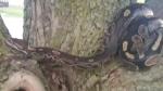 Missing snake