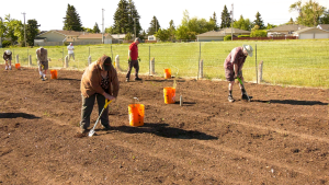 Members of seven Calgary Lions clubs are putting in some sweat equity planting thousands of trees in a northeast off leash dog park