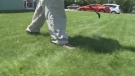 Tips on summer lawn care