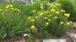 Community gardens in Washago