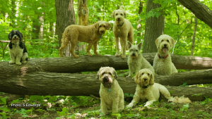 Oscar, Fritz, Maple (top), Widget, Rocket (middle), Willow, Buddy (on the ground) posing in the woods. (S. Edwards/CTV Viewer)
