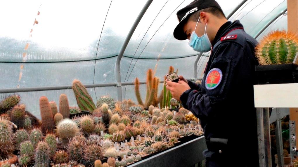 An Italian Carabinieri checks cacti