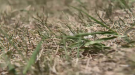 The owner of a northern garden centre says it's not too late to plant some grass in your yard. (CTV Northern Ontario)
