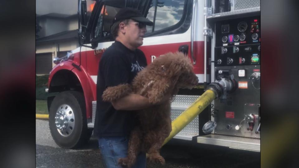 Dogs rescued in Kelowna
