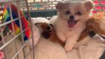 B.C. mom brings home puppy