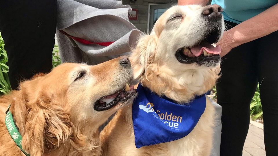 Golden rescue lottery