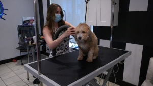 A groomer is worried she'll have to shut down because of a zoning dispute.