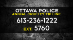 Ottawa police have set up a tip line after more dead cats were discovered showing signs of human abuse. Anyone with information is asked to call the new tip line: 613-236-1222 ext. 5760. Anonymous tips can also be submitted to CrimeStoppers. (CTV News Ottawa)