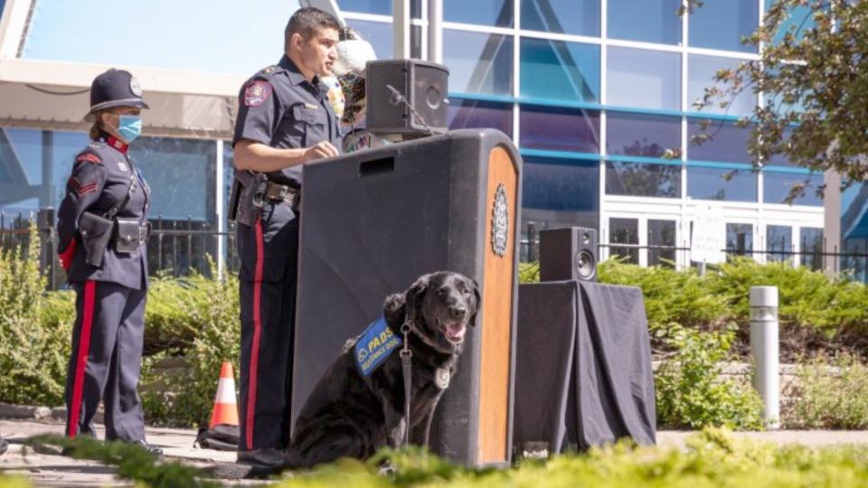 Calgary police dog Hawk
