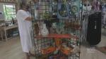 Dunrobin giftshop reopens after tornado