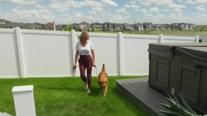 Dog gets second lease on life