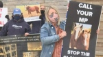Deadline for horse petition is today