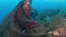 A diver captured video of a fishing net caught in coral reefs off a small rocky island in the Gulf of Thailand. (Iman Camera via Facebook)