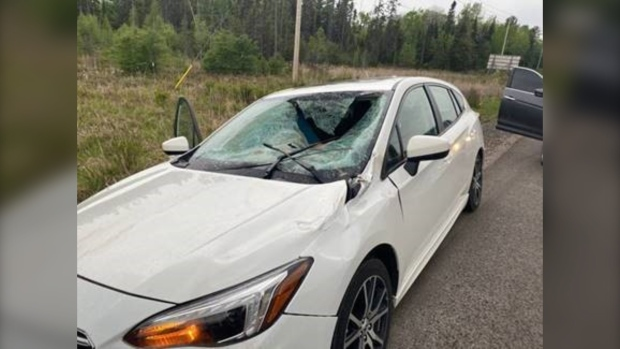 The Ontario Provincial Police in North Bays have responded to 26 animal related collision already this month and a total of 70 this year. (Supplied)