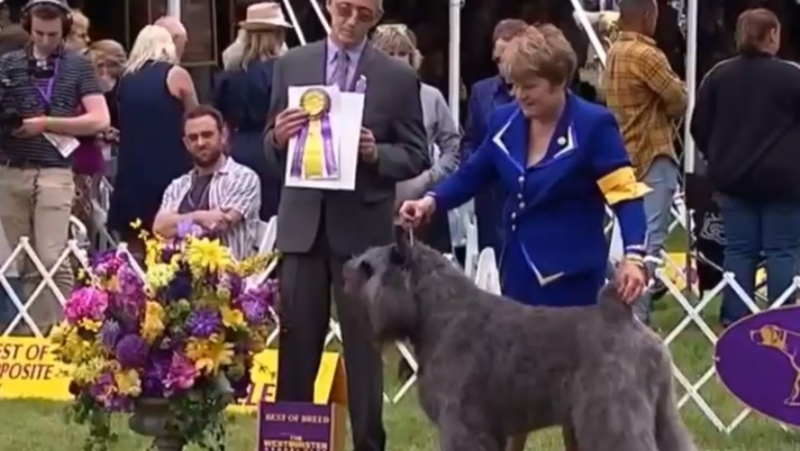 Quiche Bouvier's Pheonix Rising took home the big prize of Best in Breed