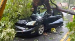 Woman in hospital after oak tree crushes car