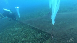 Fishing nets removed from coral reef off Thailand