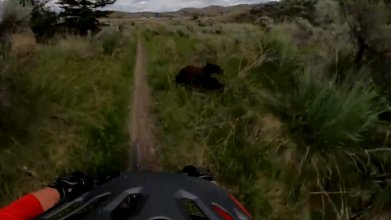 Philippe Schlesser's helmet camera caught the moment a bear nearly collided with his bike on a trail in Kamloops, B.C.