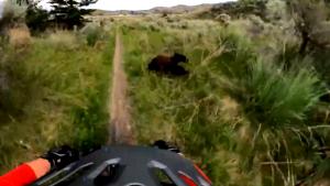 B.C. biker screams at bear after it charges at him