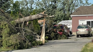 A tree is cracked in half outside a home in Mascouche, Que. after a tornado ripped through the area Monday, June 21, 2021. (Genevieve Beauchemin/CTV News)