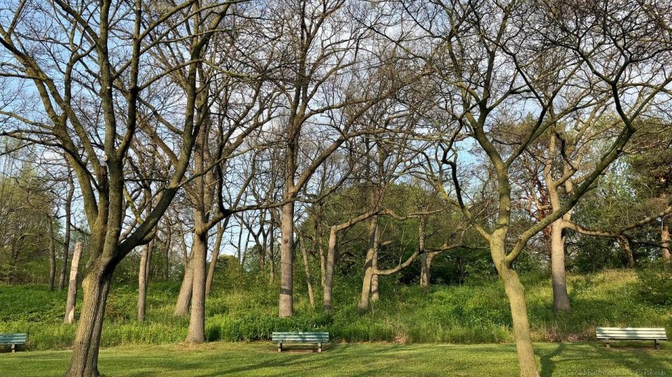 High Park, gypsy moths