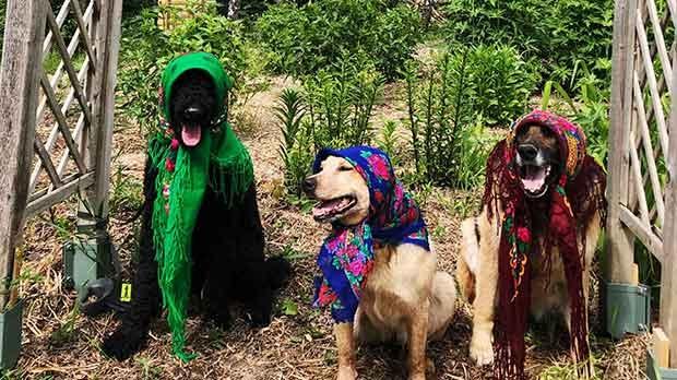 Babushka Fur Baba's enjoying some sunshine and flowers. Photo by Sheryl Dadey.