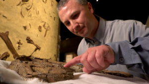 Francois Therrien, curator of dinosaur paleoecology at the Royal Tyrrell Museum of Paleontology, is lead author in a study looking at how tyrannosaur teeth, jaws and bite force evolved through their lives.
