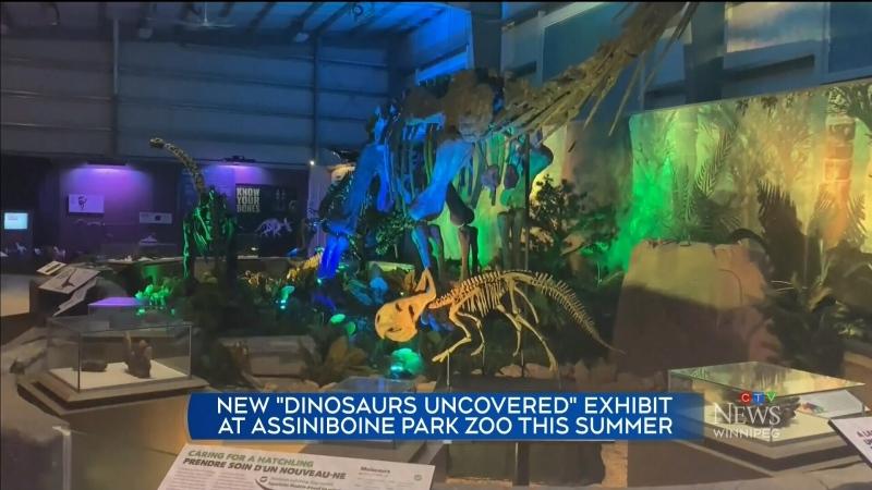 Zoo dinos
