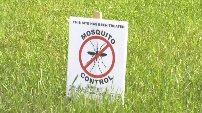 More mosquitoes than usual