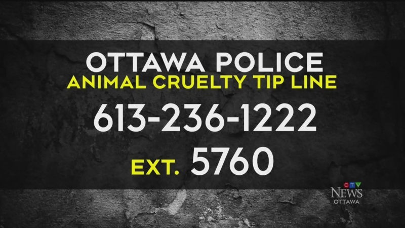 CTV News Ottawa at Six for Tuesday, June 22, 2021