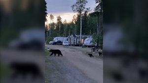 A bear and her two cubs were put down recently in the Cabin Lake area. (Facebook)
