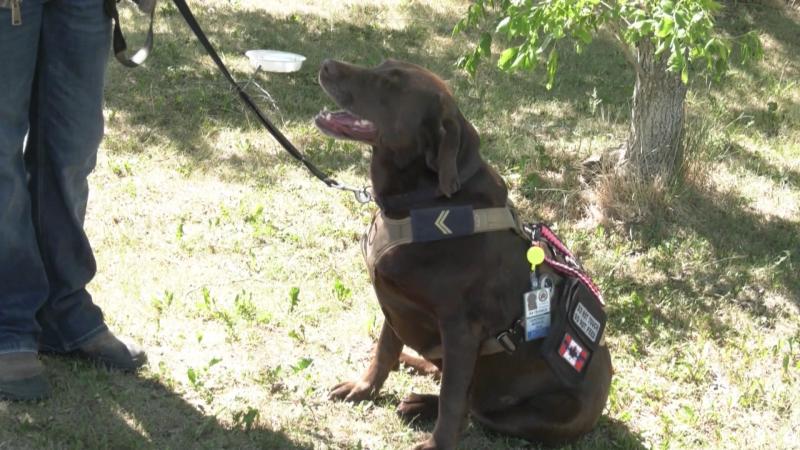 Chance, service dog, denied, Nanton, Alberta