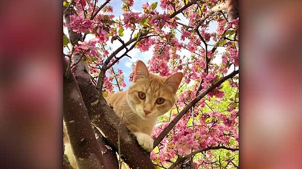 Pumpkin enjoying the blooming tree in Killarney. Photo by Maddy Riley.