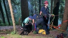 A dog named Stella was rescued off a cliff in North Vancouver on June 23, 2021. (DNV Fire Rescue Services/Twitter)
