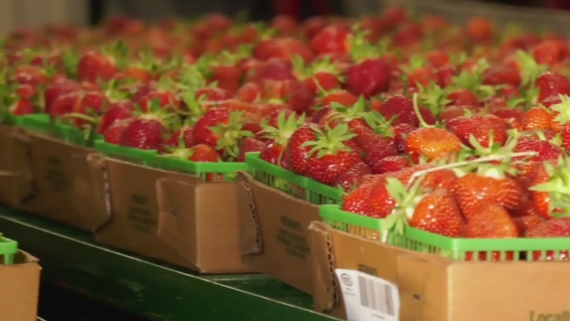 Fields to Forks: Strawberry season at Heeman's