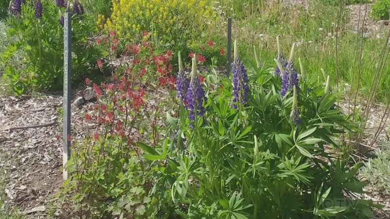 Group attracting more pollinators to the region