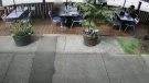 In the video, a man can be seen seated on the patio. As a family walks past on the sidewalk, the man stands up from his seat, walks with the family and leaves. (Four Olives Restaurant)
