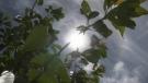 Vancouver Island bracing for severe heatwave