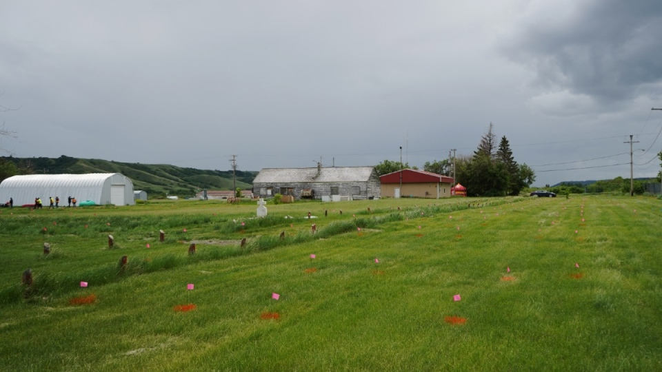 Flags mark the sites of unmarked graves