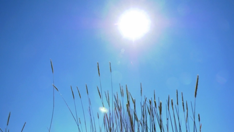 Ranchers and farmers in Alberta are keeping a close eye on weather forecasts during the heat wave.