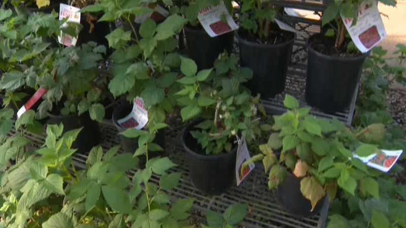 You can still add perennials to your garden now to create blooms for seasons to come. Lane Fraser has more from Golden Acre
